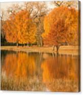 Two Orange Trees Canvas Print
