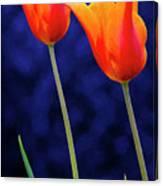Two Orange Tulips On Blue Canvas Print