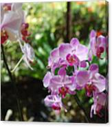Two Orchid Branches Number One Canvas Print