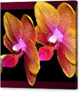 Two Orchids And A Bud Canvas Print