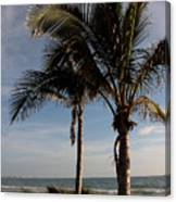 Two Palms And The Gulf Of Mexico Canvas Print