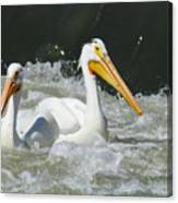 Two Pelicans At Horn Rapids Canvas Print