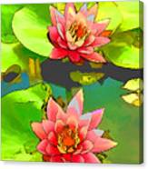 Two Pink Blooming Water Lilies  Canvas Print