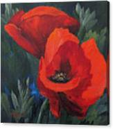 Two Poppies  Canvas Print