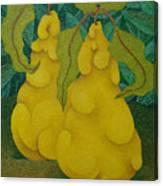 Two Quinces  2008 Canvas Print