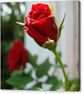 Two Red Roses Canvas Print