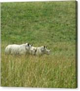 Two Rhino In The Grass Canvas Print