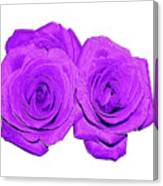 Two Roses Violet Purple And Enameled Effects Canvas Print