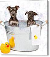 Two Scruffy Puppies In A Tub Canvas Print
