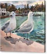 Two Seagulls By The Sea Canvas Print
