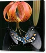 Two Spicebush Swallowtail Butterflies On A Turks Cap Lily Canvas Print