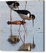 Two Stilts Walk The Pond Canvas Print