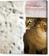 Two Stray Cats Canvas Print