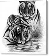 Two Tigers Canvas Print
