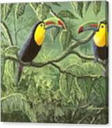 Two Toucans Canvas Print