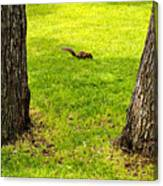 Two Trees And A Squirrel Canvas Print