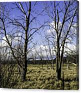 Two Trees Of Blue Canvas Print