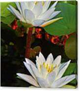 Two Water Lilies 004 Canvas Print