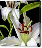 Two Wonderful Lilies  Canvas Print