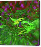 Two Yellow Frogs Canvas Print