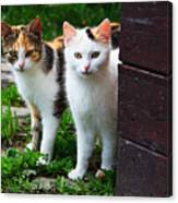 Two Young Cats Canvas Print