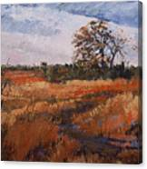 Typical Texas Field Canvas Print
