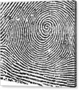 Typical Whorl Pattern In 1900 Canvas Print