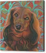 Long-haired Dachshund Canvas Print