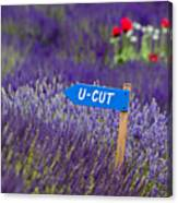 U-cut Lavender Canvas Print