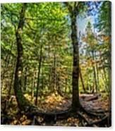 U Shaped Trees Cascade Mountain Ny New York Canvas Print