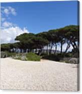 Umbrella Pine, Lerins Island Canvas Print