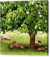 Umbrella Tree Canvas Print