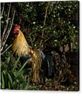 Uncle Rooster Canvas Print