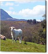 Under Muckish ,donegal  Canvas Print