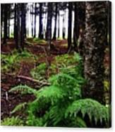 Under The Alaskan Trees Canvas Print