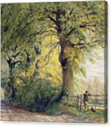 Under The Beeches Canvas Print