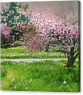 Under The Cherry Tree Canvas Print