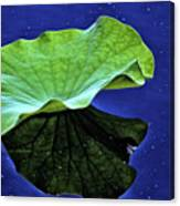Under The Lily Pad Canvas Print