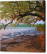 Under The Mangroves Canvas Print