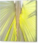 Under The Palm I Gp Canvas Print