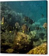 Under The Sea Scape Canvas Print
