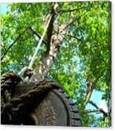 Under The Tire Swing Canvas Print