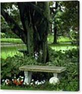 Under The Tree Canvas Print