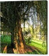 Under The Weeping Willow Canvas Print