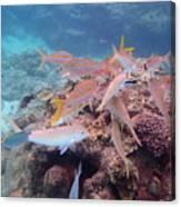 Under Water Fiji Canvas Print