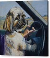 Underage Driver Canvas Print