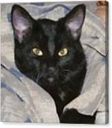 Undercover Kitten Canvas Print