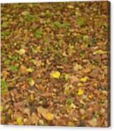 Undergrowth, Leaves Carpet. Canvas Print
