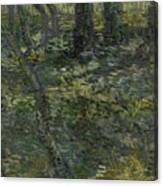 Undergrowth Saint Remy De Provence  July 1889 Vincent Van Gogh 1853  1890 Canvas Print