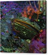 Undersea Clam Canvas Print
